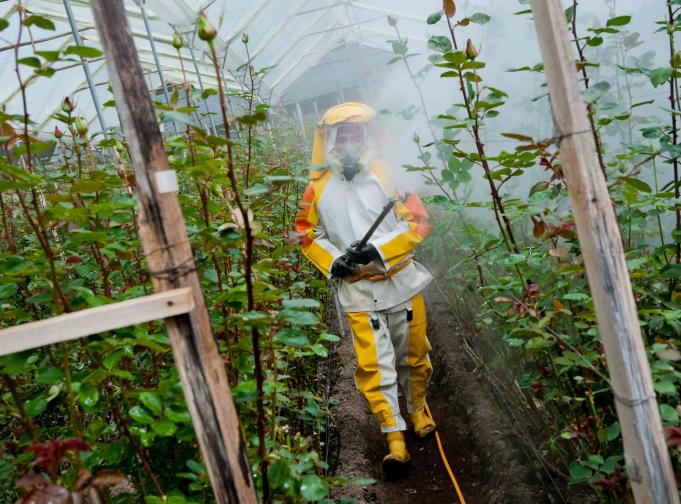 pesticides bhopal