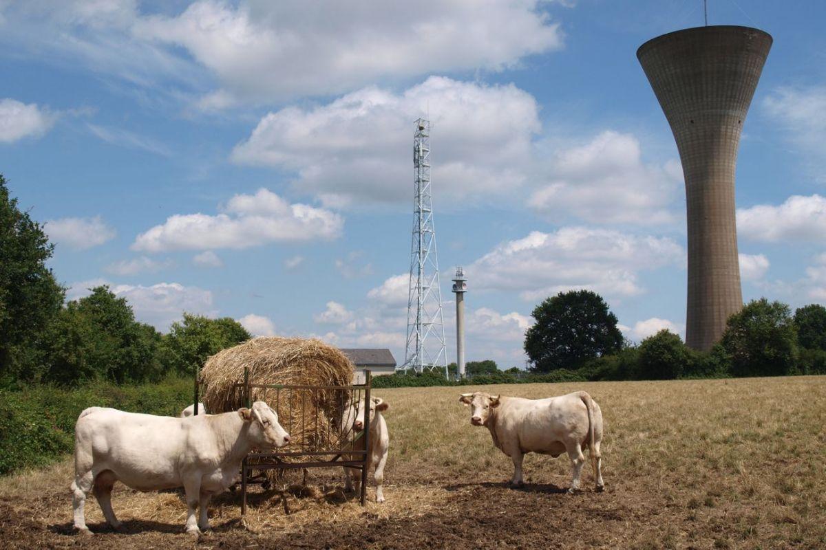 c_avenir_agricole-4953864